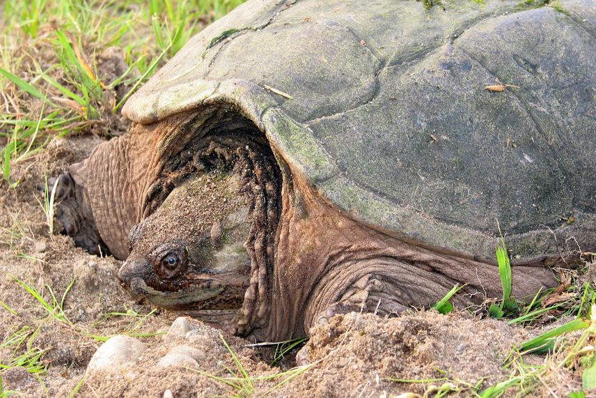 Jagd Auf Bissige Schildkröte Bub In Bayern Angegriffen Tiroler