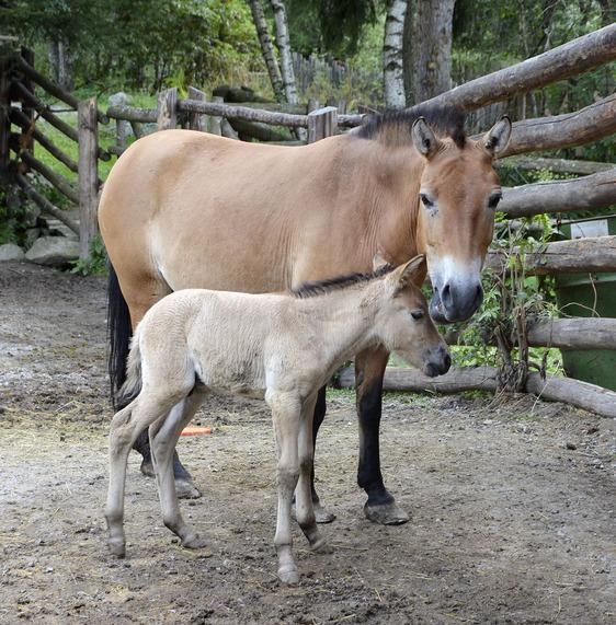 Hektor wenige Tage nach seiner Geburt.