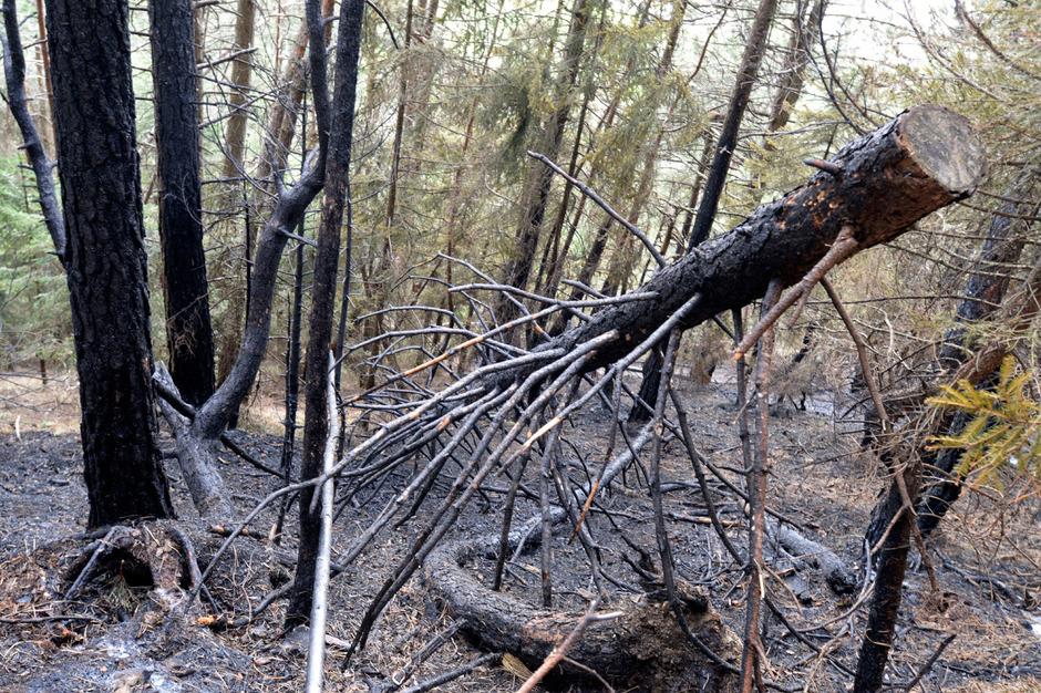 Das Feuer am Hochmahdkopf in Absam hat auf einer Fläche von 50 Hektar fast die gesamte Vegetation zerstört.