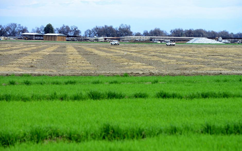 Ein bewässertes und ein braches Feld: Dasd Central Valleys ist am schlimmsten von der Dürre betroffen. Ohne künstliche Bewässerung geht hier nichts.