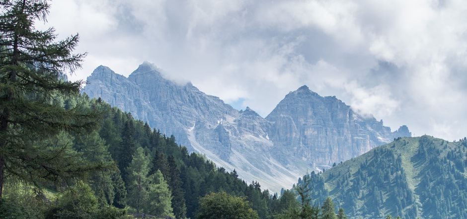 """Der Schein trügt: Der Zustand der Wälder in Tirol ist nicht überall im grünen Bereich, Verbissschäden setzen den Bäumen zu.<span class=""""TT11_Fotohinweis"""">Foto: Hammerle</span>"""
