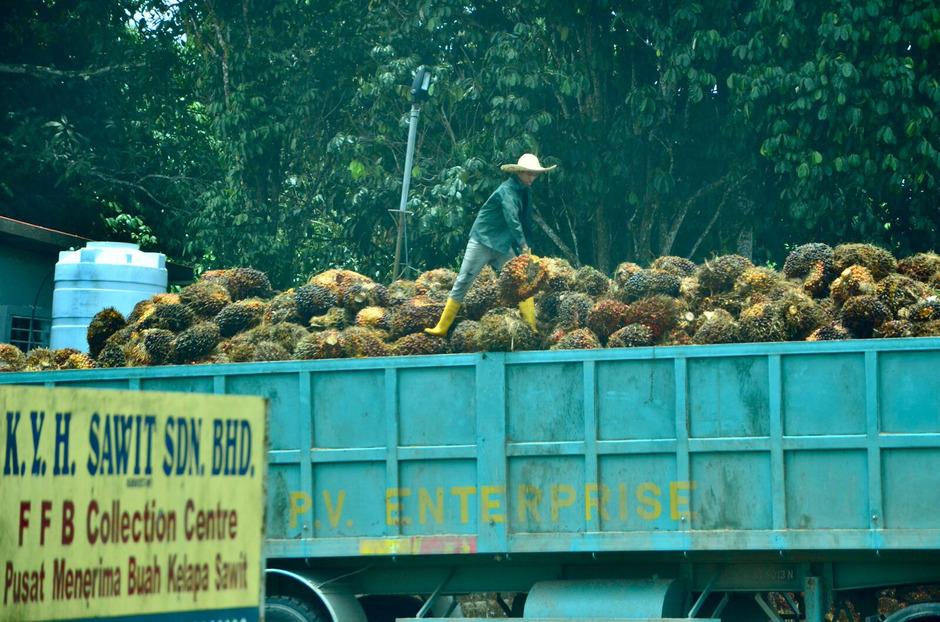 Ein Arbeiter auf einer Palmöl-Plantage.