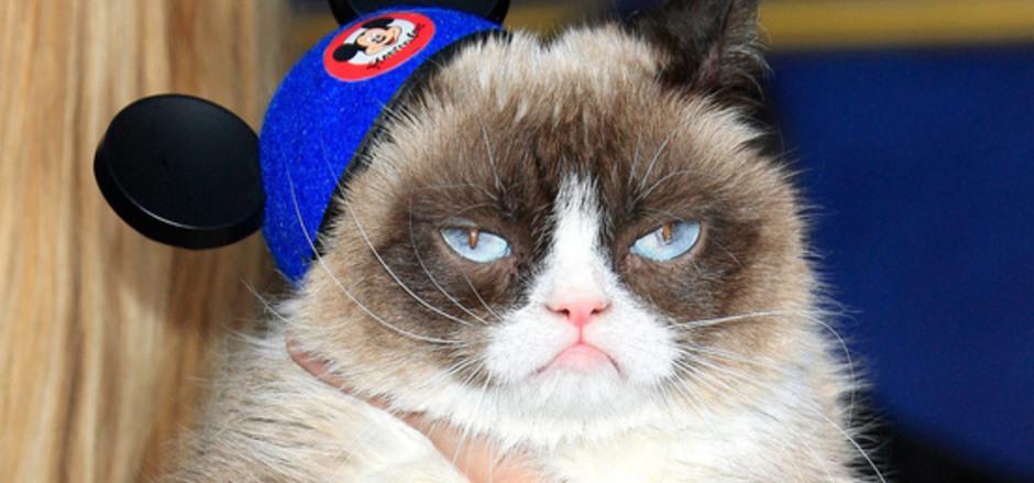 Die mürrische Katze hat es der Netzgemeinde angetan.