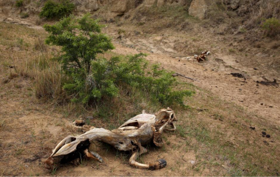 El Nino bringt weiten Teilen Afrikas Dürre.