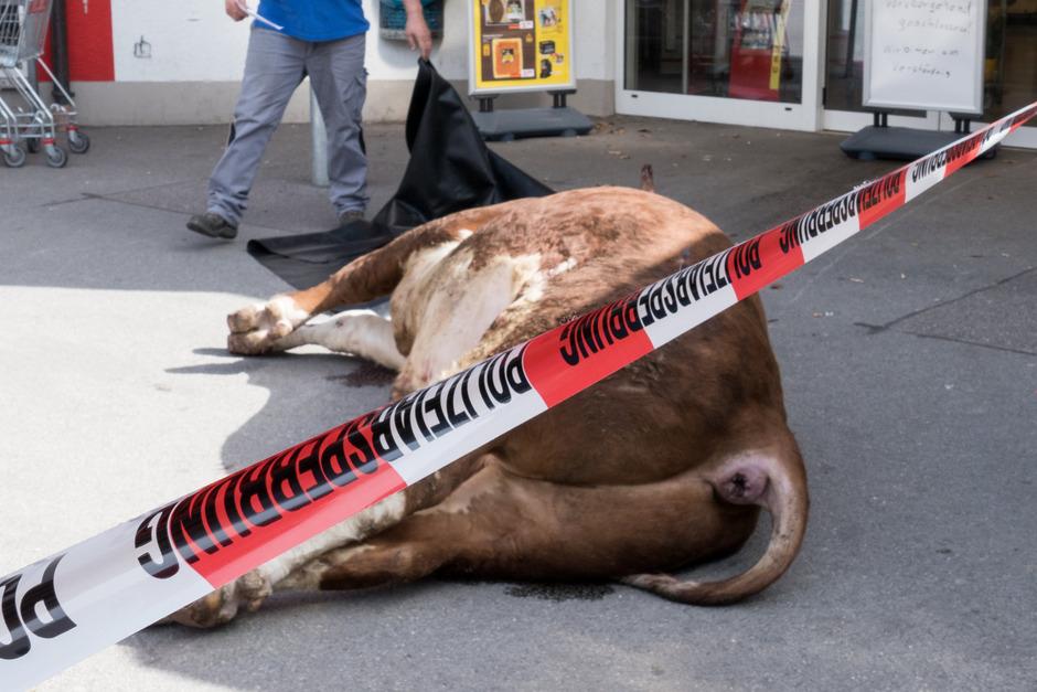 Ein Bulle verirrte sich in einen Supermarkt in Eggenfelden. Das Rind wurde von der Polizei erschossen.