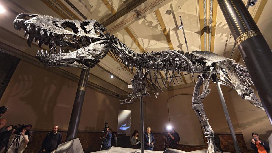 Im Berliner Naturkundemuseum ist eines der weltweit am besten erhaltenen Exemplare des Tyrannosaurus rex zu sehen.