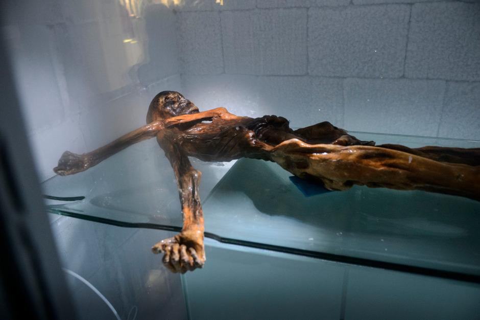 """Die Gletschermumie """"Ötzi"""" in der Kältekammer in Bozen."""