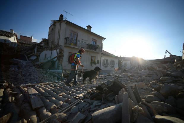 Spürhunde sind nach dem Erdbeben im Dauereinsatz, um nach Überlebenden zu suchen.