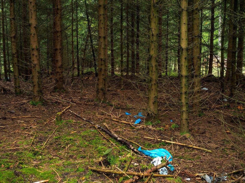 In diesem Waldstück nahe Rodacherbrunn (Thüringen) wurde die Leiche von Peggy entdeckt.