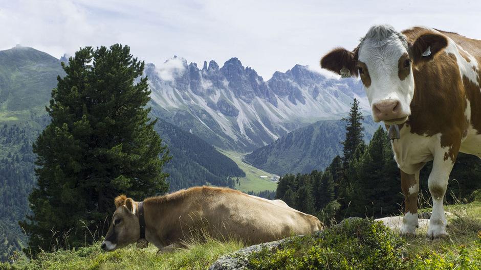 """Tirol 4.0: """"Tirol - Herz der Alpen. Ein Lebensraum im Dialog mit der alpinen Natur."""""""