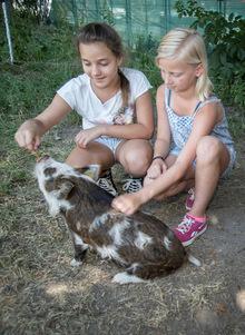 Die Schüler kümmern sich um die Schweine.