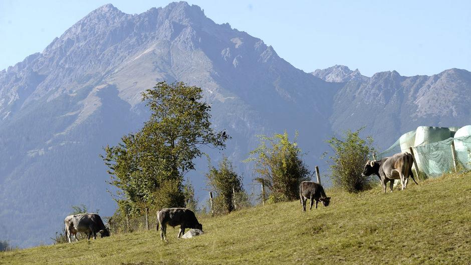 2014 war im Pinnistal eine 45-jährige Deutsche von Kühen attackiert und zu Tode getrampelt worden. (Symbolfoto)