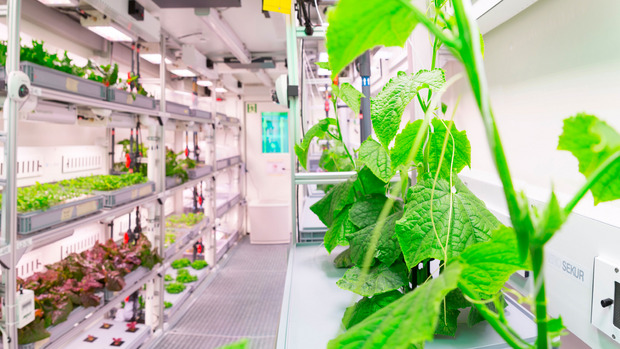 Radieschen, Gurken, Salat und - wenn es gut läuft - auch Erdbeeren sollen ab Jänner in der Antarktis wachsen.