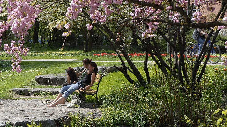 Natur und Ruhe genießen – das neue Alkoholverbot soll Erholungssuchenden das alles im Innsbrucker Rapoldipark wieder ermöglichen.