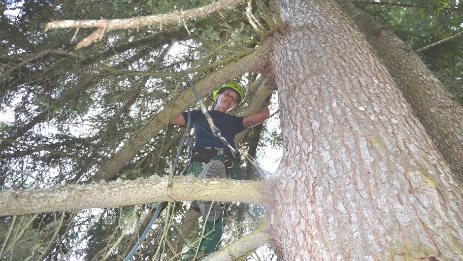 Klettergurt Tree Austria : Ernte in schwindelerregender höh tiroler tageszeitung online