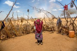 Somalia stöhnt erneut unter einer verheerenden Dürre. Die Ernten sind ausgefallen, die Tiere gestorben.