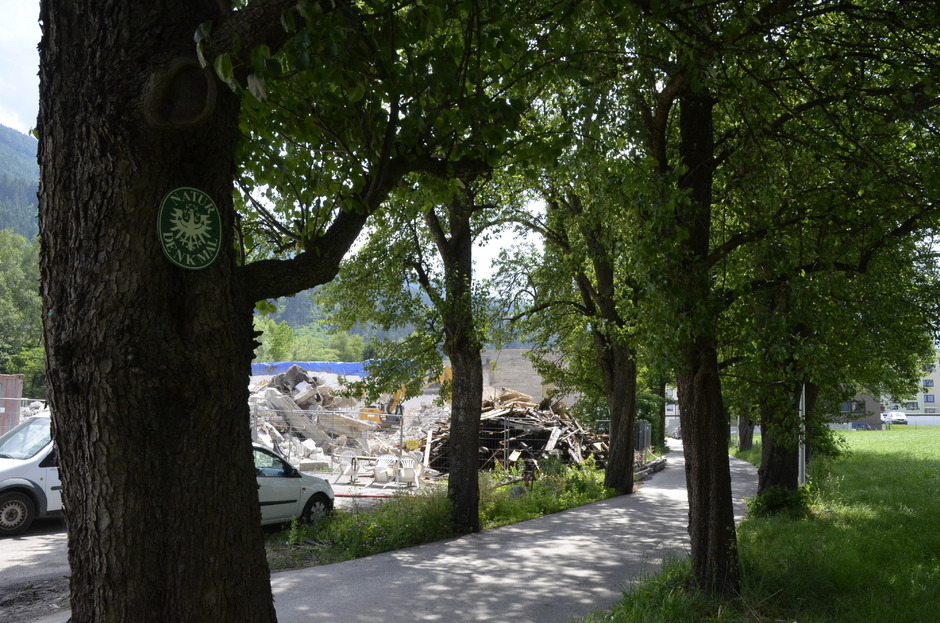 Die Birnbaumallee ist um acht Bäume ärmer (Archivbild).
