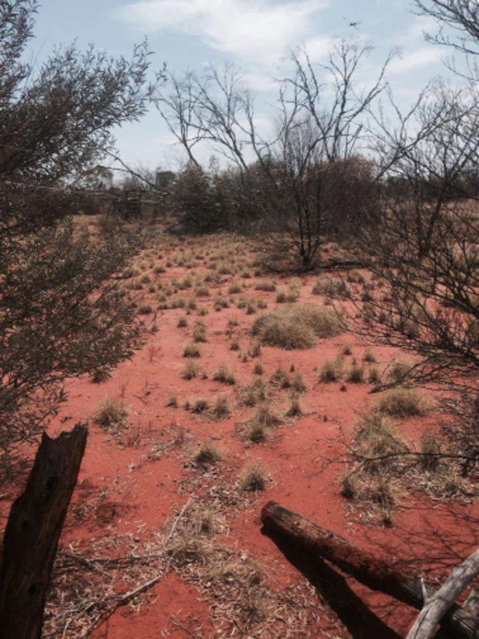 Australisches Outback. (Symbolbild)