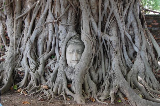 Eines der beliebtesten Fotomotive ist der Baum-Buddha neben dem Mahathat Tempel.