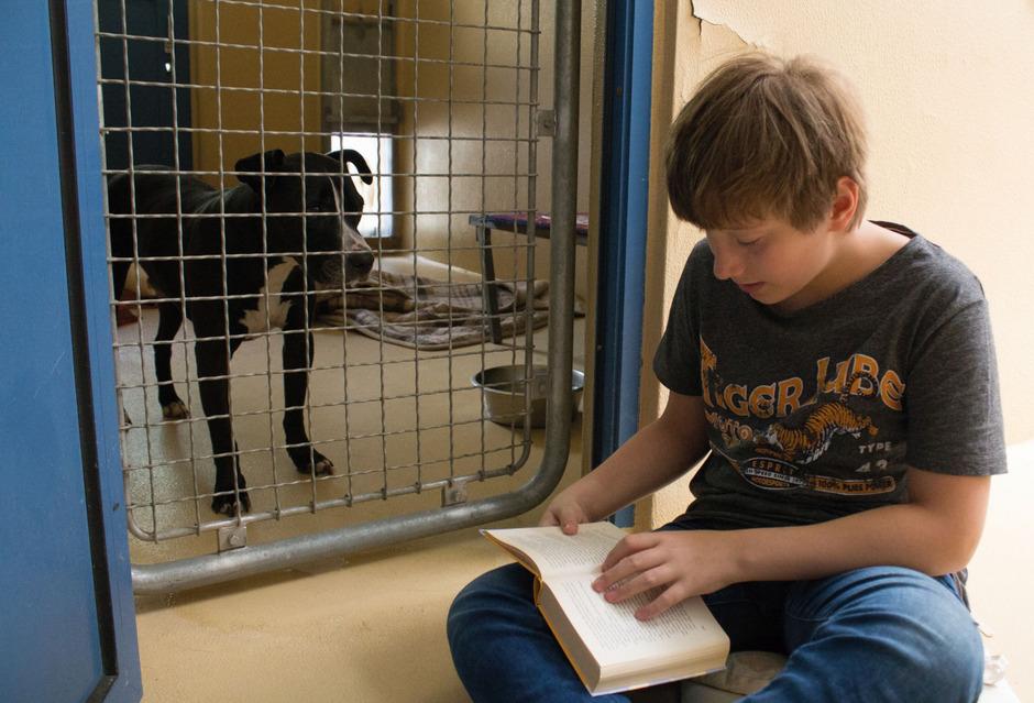 Kinder lesen Hunden im Tierheim vor