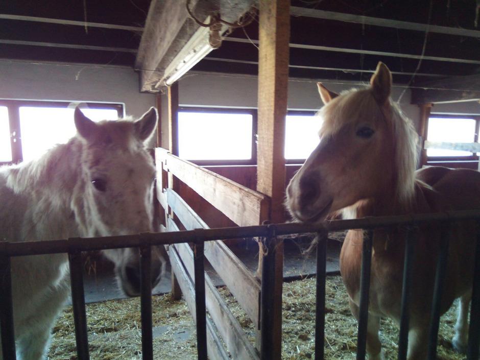 Pony Filou Verschwand Zum Schutz Von Der Bildfläche Tiroler