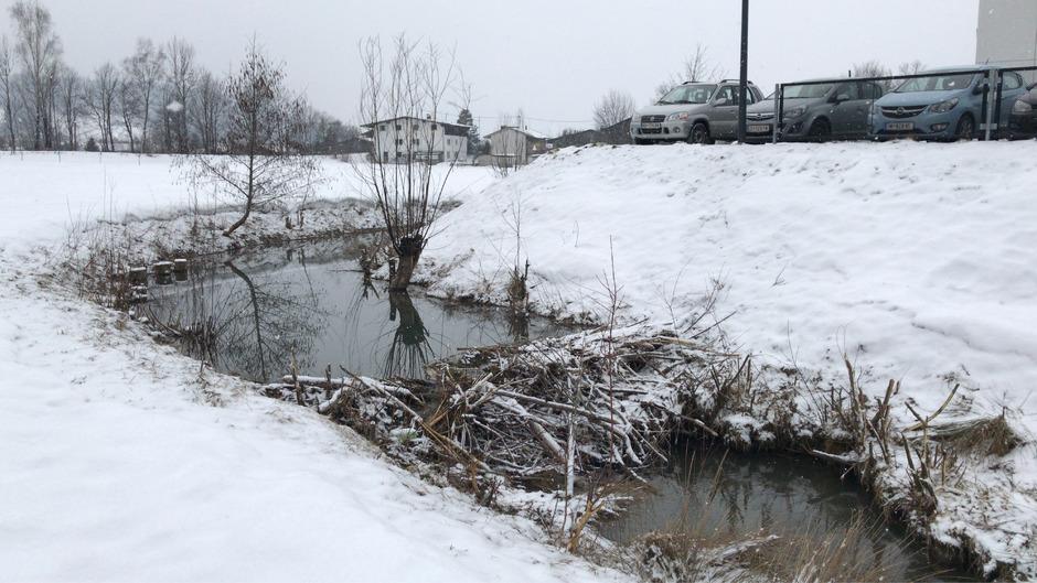 Hier waren Kirchdorfs Biber am Werk: Der Staudamm im Kirchdorfer Bach hinter der Volksschule sorgt derzeit für einen erhöhten Wasserspiegel, weshalb Spielgeräte zum Teil unter Wasser stehen.