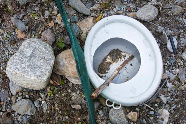 Mit diesen Kübelfallen im Boden werden die Amphibien aufgehalten und gesammelt.