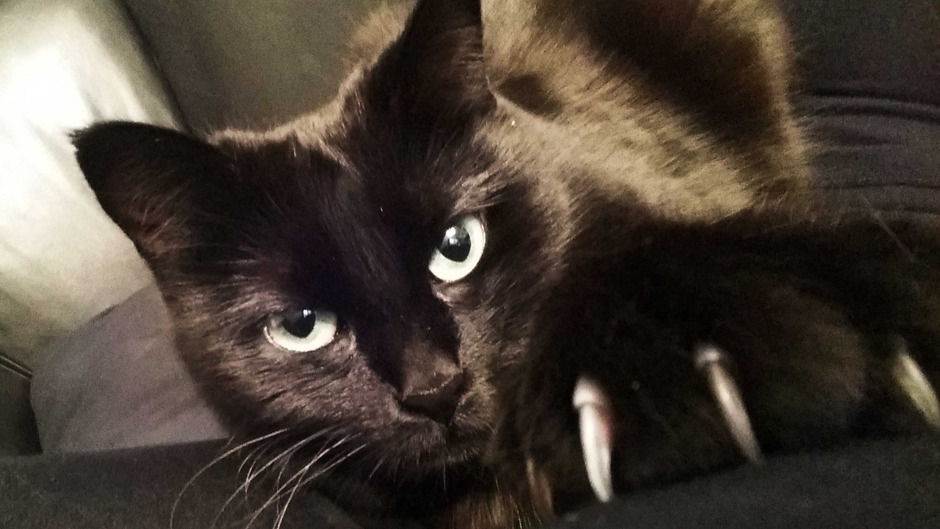 Schwarze Katzen bringen Unglück - besonders am Freitag, den 13., vermuten Abergläubische Unheil hinter jeder Ecke.