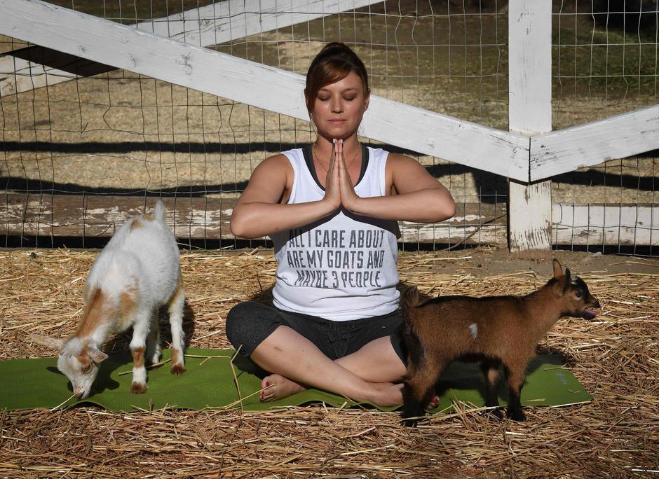 Yoga-Kurse mit Ziegen in New York verhindert - Vaterland