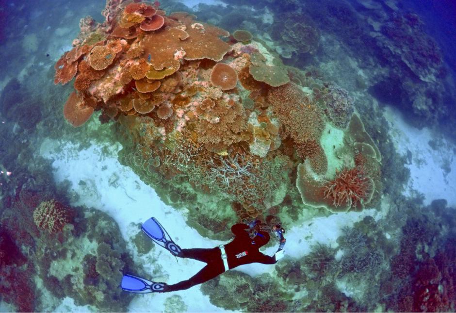Das Ökosystem leidet unter schweren Umweltschäden.