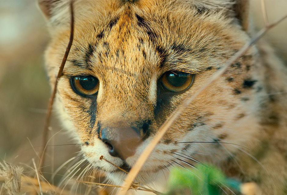 Doku zeigt 38 tierische Geschichten