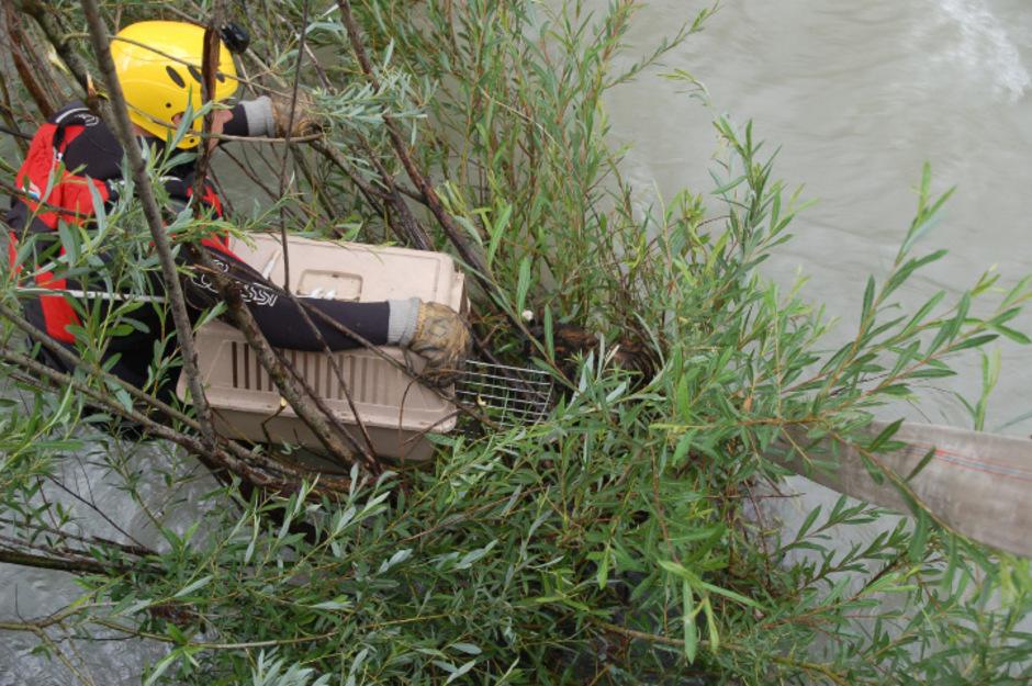 Ein Einsatzschwimmer der Feuerwehr barg das verängstigte Tier.