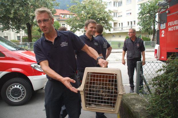 Die Katze wurde ins Tierheim gebracht.