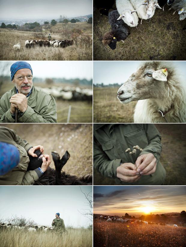 Erich und die Schafe: Kategorie-Sieger Objektiv 2018 in der Kategorie Fotoserien von Stefan Knittel.