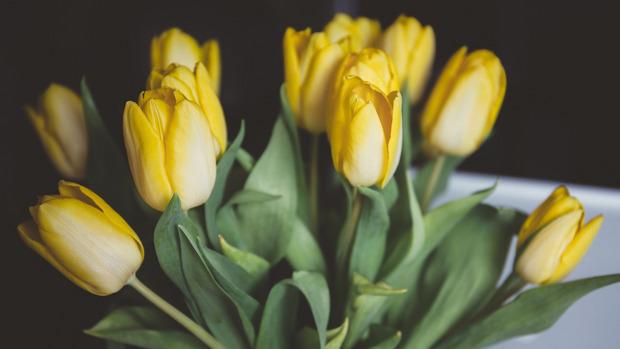 Eine gerade Zahl gelber Blumen und das vielleicht noch zum Weltfrauentag? Ein No-Go!
