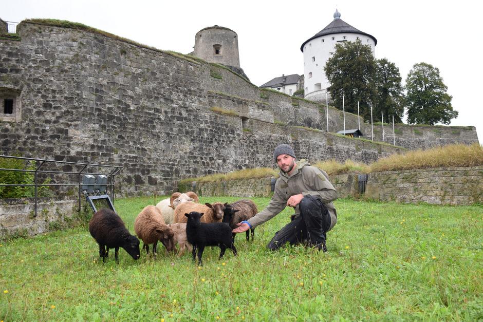 Festungswart Thomas Holzer hat seit Juli ein weiteres Aufgabengebiet: sieben Roussillon-Schafe, die für die Rasenpflege am Festungsberg zuständig sind.