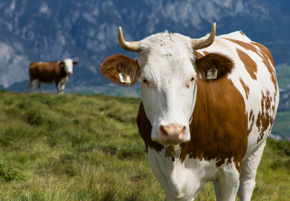 6ad463cf65 98 Prozent der Biobauern würden sich wieder für Bio entscheiden ...