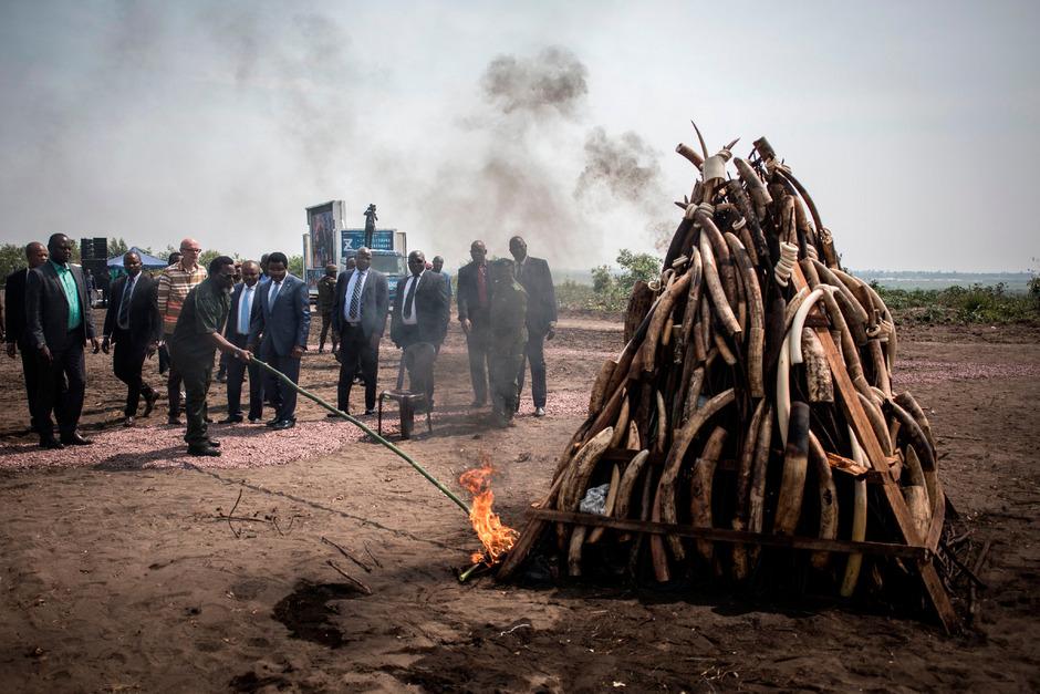 Joseph Kabila zündete den Stapel Elfenbein an.