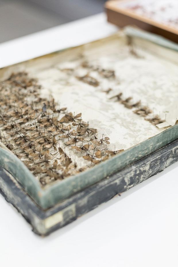 Zerstört: In Schachteln werden Insekten nicht mehr gelagert.