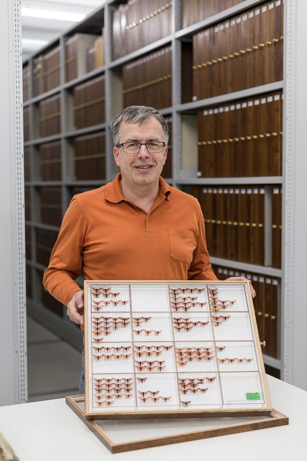Peter Huemer von der Naturwissenschaftlichen Sammlung zeigt die neuen Insektenkästen. Glas schützt vor Staub und Eindringlingen.