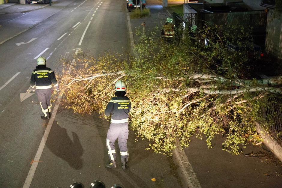 In Niederösterreich musste die Freiwillige Feuerwehr Mödling blockierte Straßen freigeräumen.