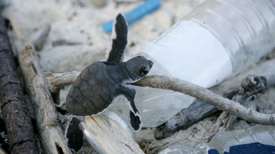 Eine kleine Schildkröte auf einer Plastikflasche: Vor allem der menschliche Konsum sei der Treiber hinter der Zerstörung von Lebensräumen, heißt es im WWF-Report.