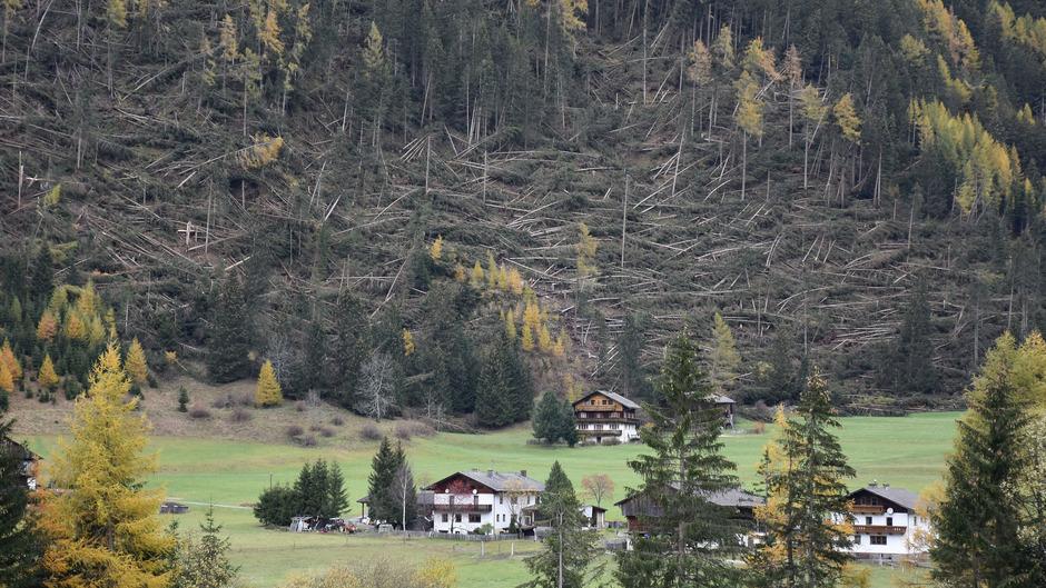 22 Millionen Euro Schaden richtete der Sturm allein in den Wäldern an.