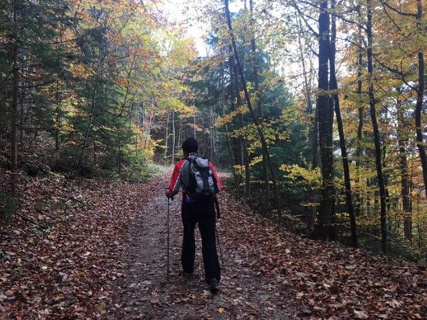 Zunächst geht es durch tollen Herbstwald.