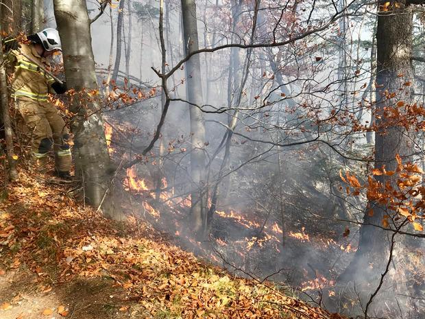 Ein 300 Quadratmeter großes Waldstück hatte Feuer gefangen.