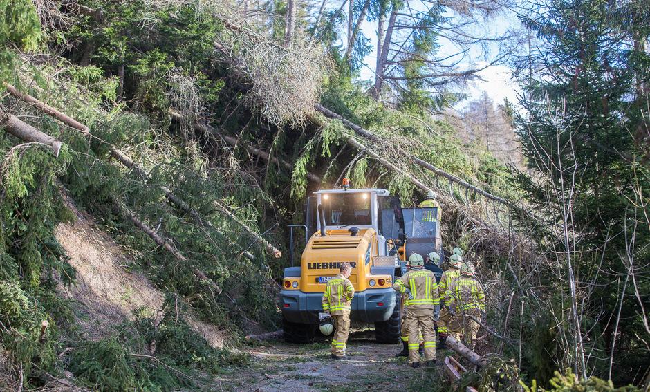 Starke Windböen entwurzelten hunderte Bäume und zerstören in Matrei in Osttirol.