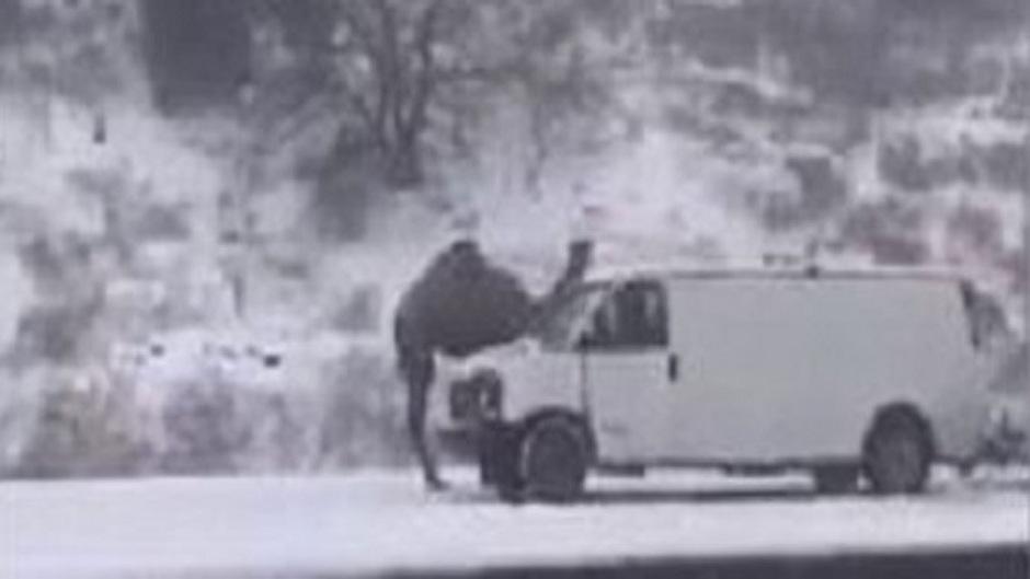 Ein Dromedar im Schneesturm in Pennsylvania.
