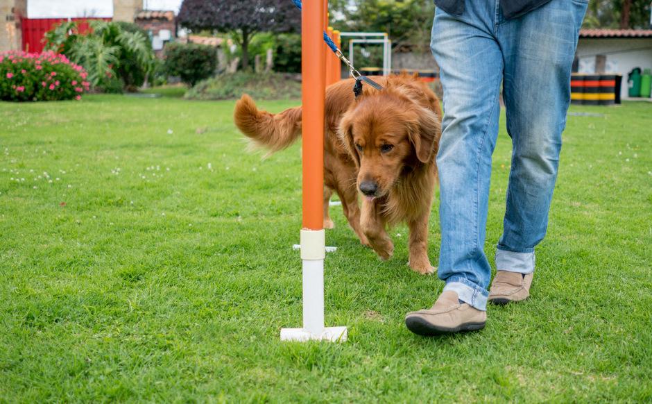 In Wien sollen mit 1. Juli 2019 verpflichtende Kurse für Hundehalter eingeführt werden.