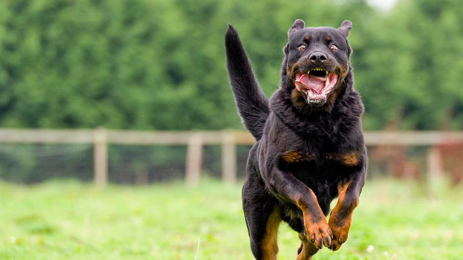 Zum Davonlaufen: Nach Hundeattacken müssen sich manche Opfer für ihre Reaktion rechtfertigen