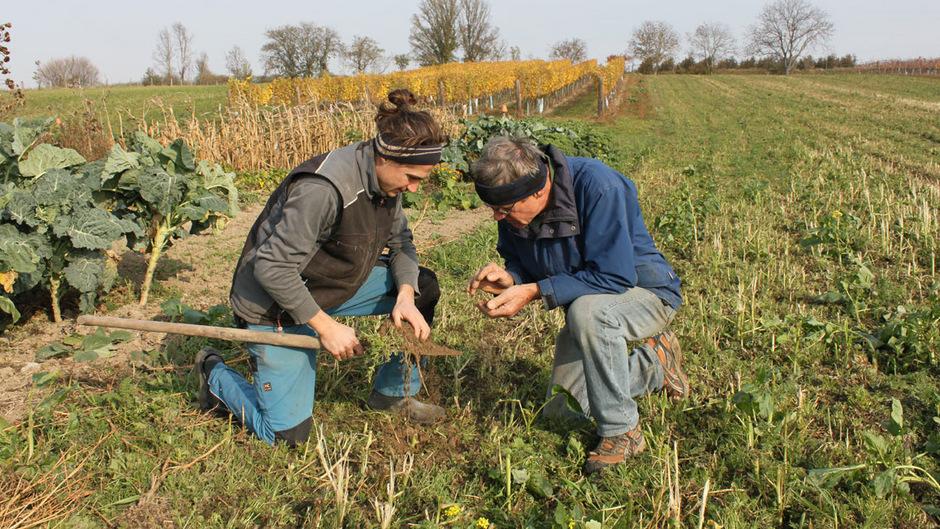"""Mitarbeiter von der Initiative """"Perspektive Landwirtschaft"""" nehmen eine Bodenprobe."""